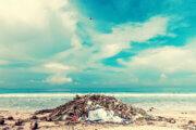 Мусор на побережье морей и океанов